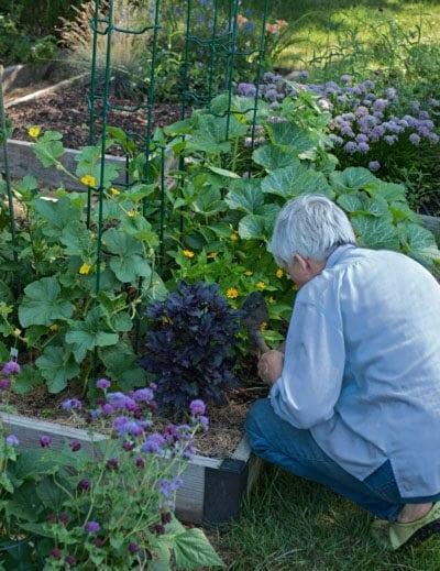 Garden and Recipes